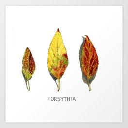 Fall Forsythia Leaves Art Print