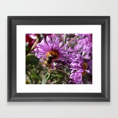 Busy Bee on a Violet Flower Framed Art Print