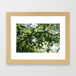sunflare through the leaves Framed Art Print