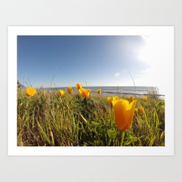Poppies in the Wild Art Print