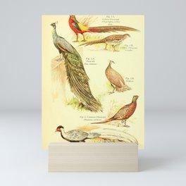 William Playne Pycraft - A Book of Birds (1908) - Plate 11: Game-birds; Pheasants and Peafowl Mini Art Print