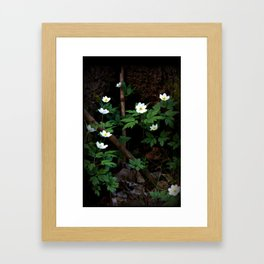 Anemone Nemorosa Framed Art Print