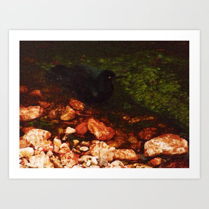 """Black Bird Bathing"" Art Print"