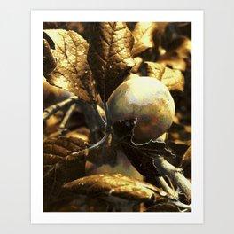 Golden Plum Art Print