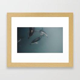 Les Wild Dusky Dolphins  Framed Art Print
