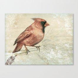Snowy Northern Cardinal Canvas Print