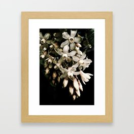 Flowering Currant, White icicle Framed Art Print