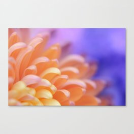 Flower Sunrise | cute pastel flower, peach flowers, orange floral pattern, pretty petals, macro Canvas Print