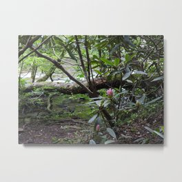 Rhododendron on Abrams Creek Metal Print
