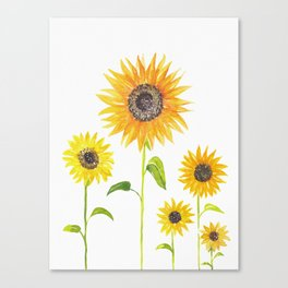 Sunflowers Watercolor Painting Canvas Print