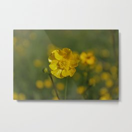 Sweet as a Buttercup Metal Print