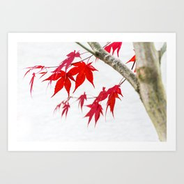 red maple tree Art Print