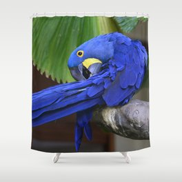 A Hyacinth Macaw Preening Its Feathers Shower Curtain