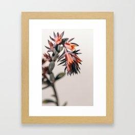 Summer Succulent #2 Framed Art Print