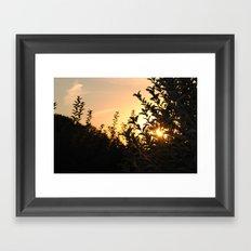 Apple Orchard at Sunset Framed Art Print