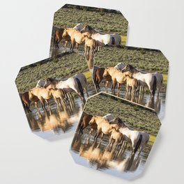 Reflection of a Mustang Family Coaster