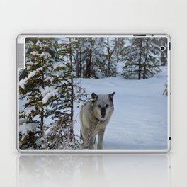 Lone wolf in the snow Laptop & iPad Skin