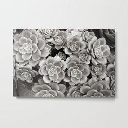 Summer Succulents, B&W Metal Print