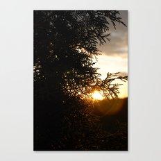 Cedar and Sun Canvas Print
