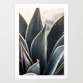 Dewdrop Art Print
