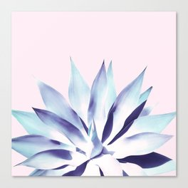 Solar Agave - Pastel blue on pink Canvas Print
