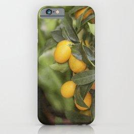 Orange and Green Citrus iPhone Case