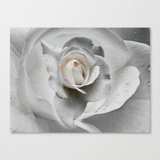 tears in the rosegarden Canvas Print