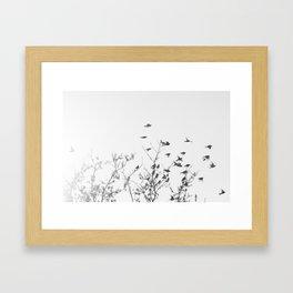 Flock of birds in flight Framed Art Print