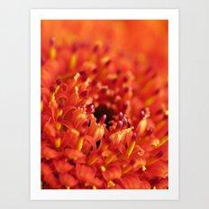 Orange Gerbera Art Print