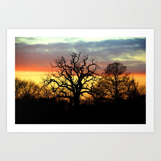 Winter sunset behind a curly tree Art Print