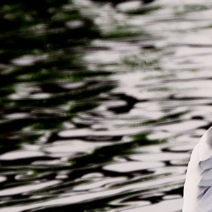 Seagull dancing on the lake  Leggings