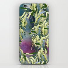 Wattle blooms in an abstract landscape iPhone Skin