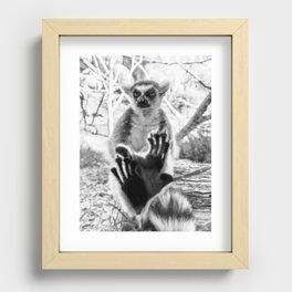 Lemur. Cool. Recessed Framed Print