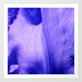 Macro Ultra Violet Iris Art Print