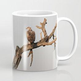 Hawk Eagle with its Catch Coffee Mug