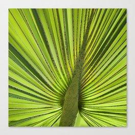Green Palm Leaf Tropical Plant Canvas Print