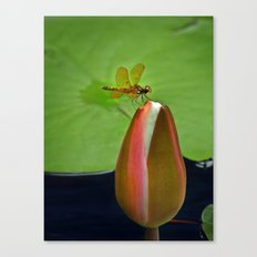 Lily Pond Amberwing Canvas Print