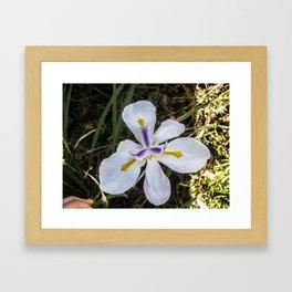 A Bloomed Flower Framed Art Print