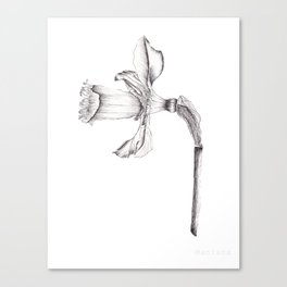 Daffodils - Black & White Canvas Print