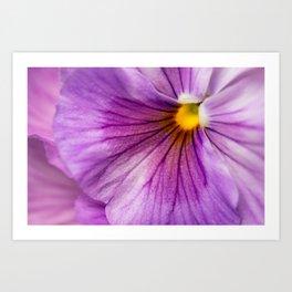Purple Pansy Flower Close-up #decor #society6 #buyart Art Print