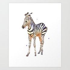 zebra, baby zebra, african wildlife, black and white, stripes, safari art Art Print