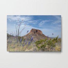 Ocotillo Cactus in the Desert Metal Print