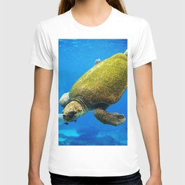 Hybrid green and loggerhead sea turtle T-shirt