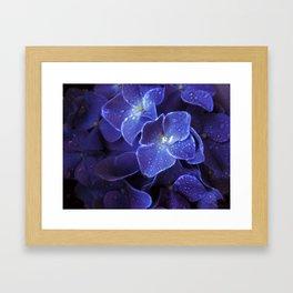 Hydrengeas! Framed Art Print
