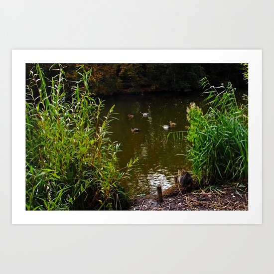 Busted! Cat watches the ducks Art Print