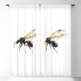 Black Winged garden ant species lasius niger Blackout Curtain