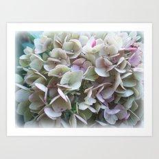 Soft Violet Hydrangea Art Print