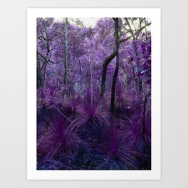 Conway National Park in Purple Art Print