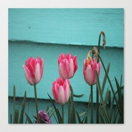 Tulips Against The Wall Canvas Print