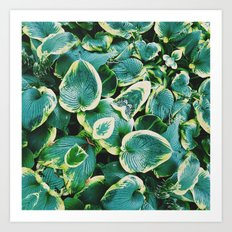 50 Shades of Green (7) Art Print